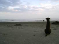 Perro poeta en la playa